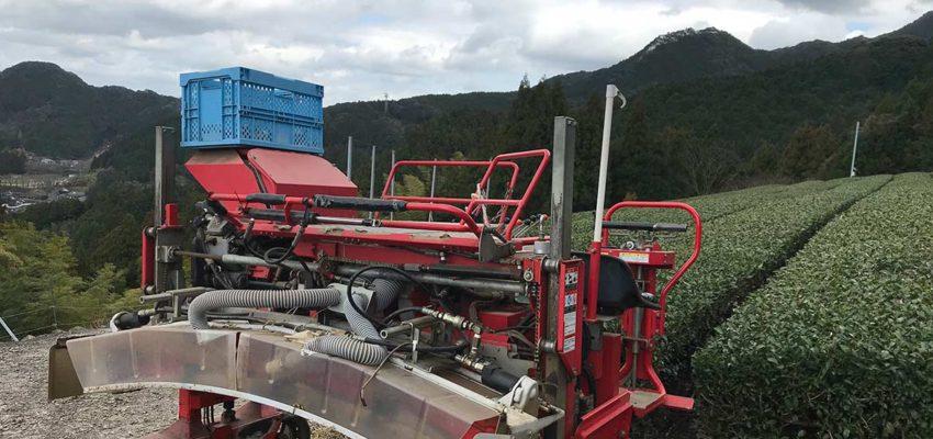 茶畑、春の整枝作業