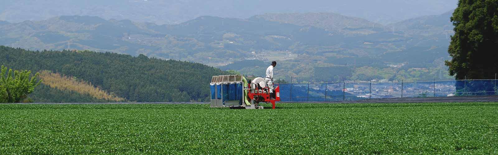 乗用機械によるお茶摘み風景