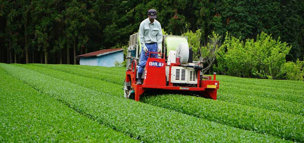 一番茶の茶摘み風景 2021年新茶