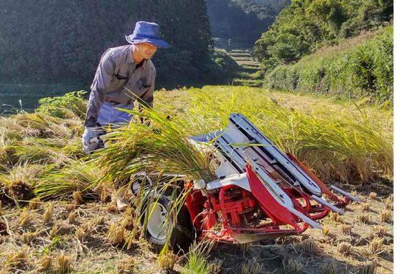稲刈りの季節。今年も美味しい米が出来ました!